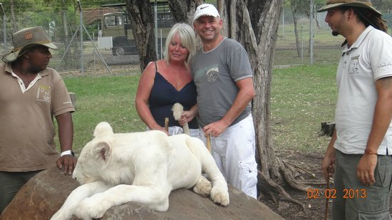 Maritim Resort & Spa Mauritius:                   Lion Interaction at La Casela