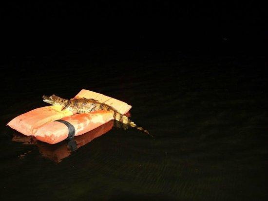 Tariri Amazon Lodge:                   Aligator spotting