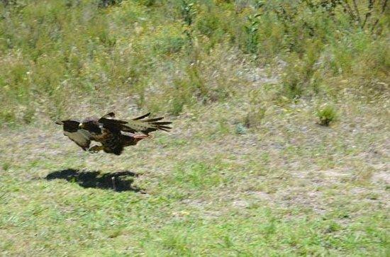 Radical Raptors: shot 6