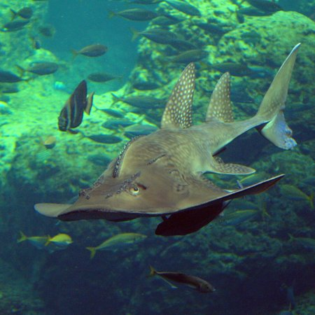aquarium-sea-life-sea.jpg