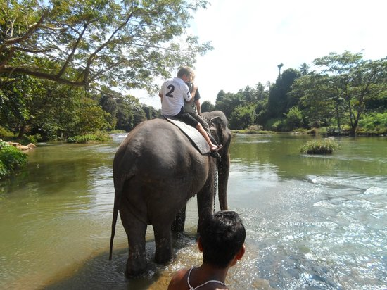 Pinnawala Elephant Orphanage:                   Pinnawala Elephant Safaris