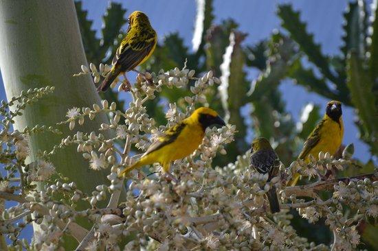 Veraclub Le Grande Sable: I variopinti uccelli