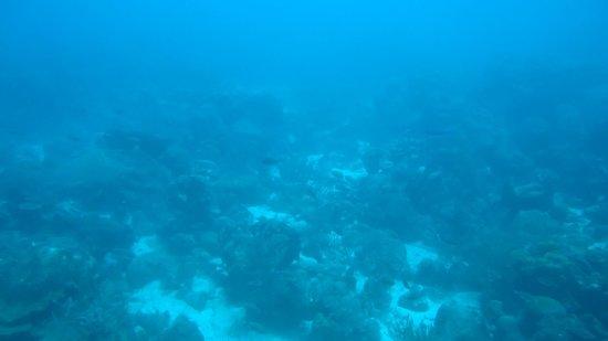 De Palm Tours:                   visão do fundo do mar