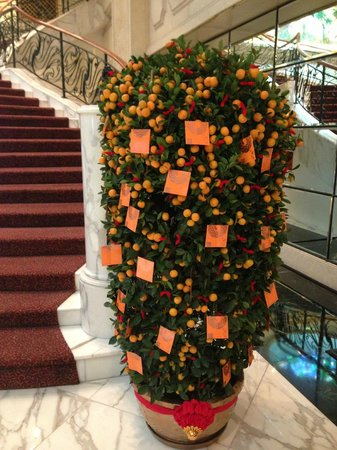 Royal Plaza on Scotts:                   New Year tree )