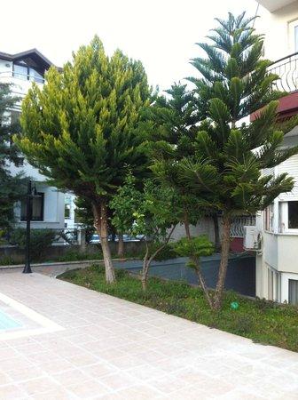 Minta Apart Hotel :                   деревья