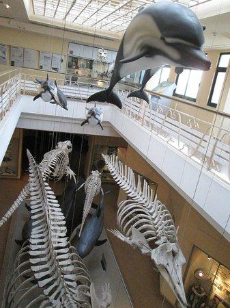 Musee de la Mer de Biarritz: Biarritz