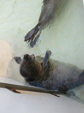 写真ビアリッツ海洋博物館枚