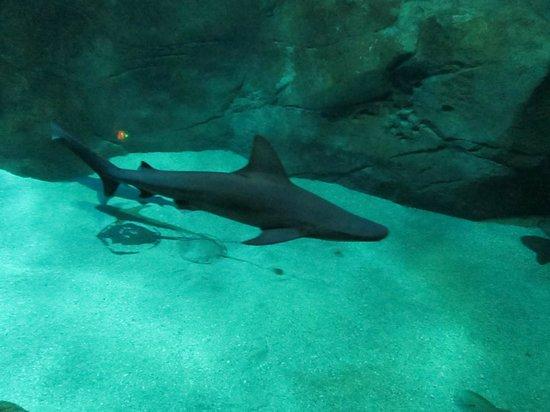 Aquarium de Biarritz: Biarritz