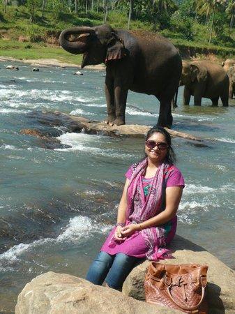 Yoga Jeewaprabha at Lewella Meditation Centre, Kandy, Sri Lanka:                   Elephant Orphanage at Kandy