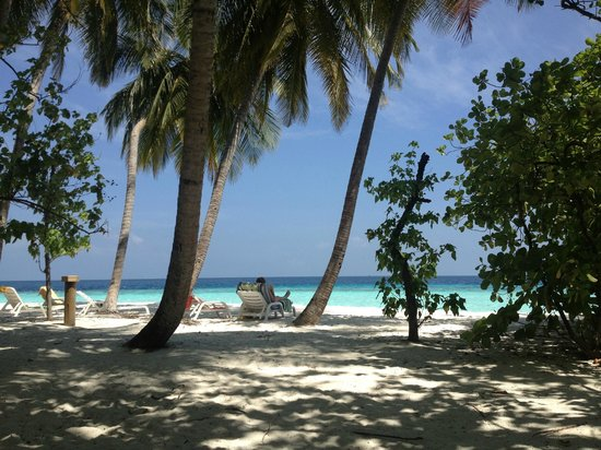 Fihalhohi Island Resort:                   Typical maldivian island