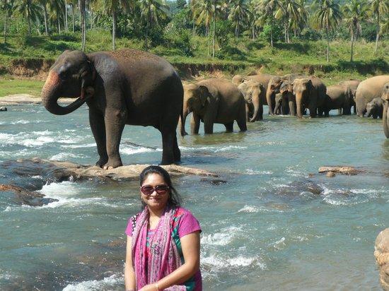 Yoga Jeewaprabha at Lewella Meditation Centre, Kandy, Sri Lanka:                   Elephant Orphanage- Kandy
