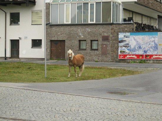 AlpinLodges Kuhtai:                   A one horse town