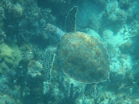 Blue Hole Watersports :                   the turtle we saw