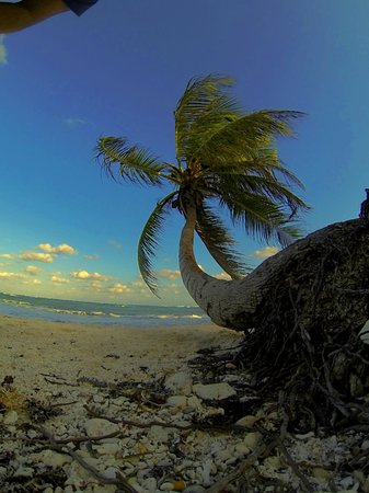 Las Villas Akumal:                   Tree on beach