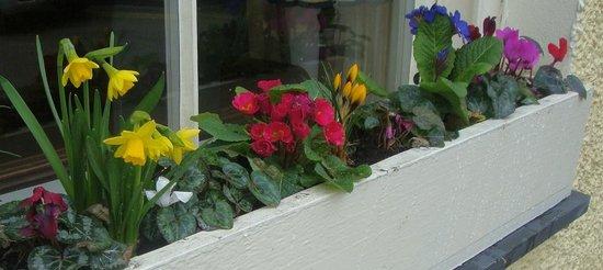 Victoria Cottage B & B: window box