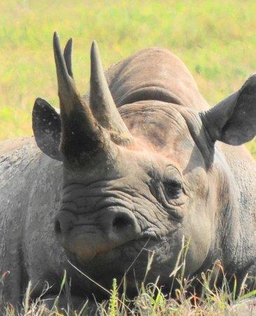 Ngorongoro Conservation Area, Tanzânia:                   черный носорог