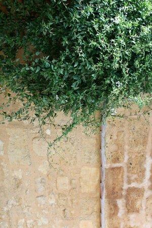 Hotel l'Avant-Scene : Les glycines du patio intérieur.