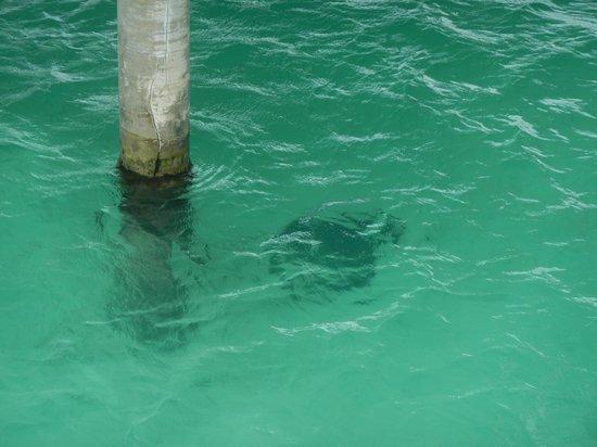 Four Seasons Resort Bora Bora:                   stingray below our unit