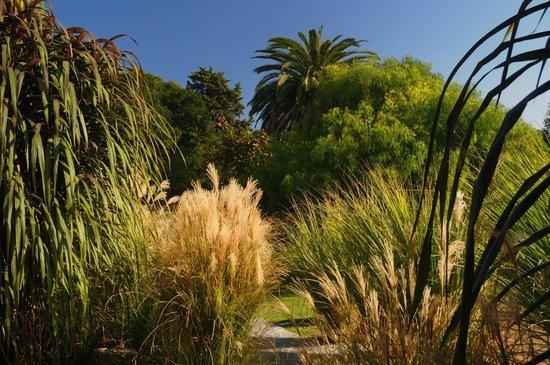 El Capullo: garden
