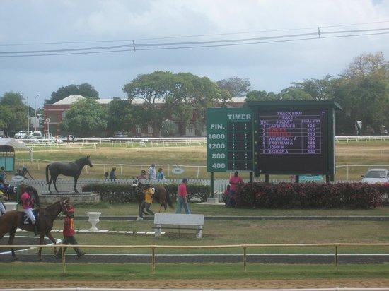 Garrison Savannah - Barbados Turf Club :                   winners circle