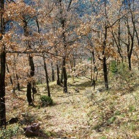 Borda El Vilar: Bosque del Vilar