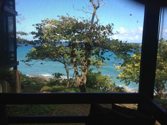 Renaissance St. Croix Carambola Beach Resort & Spa:                   Screenporch view