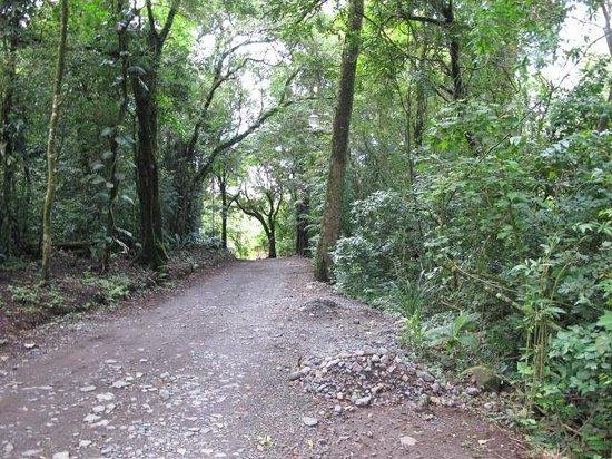 Hotel El Bosque:                   Walk path