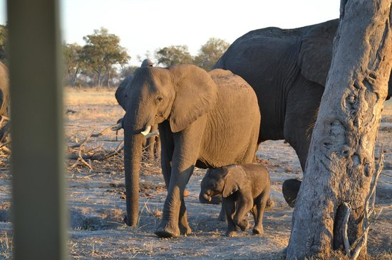 Chobe National Park, Botswana: Savute Reserve