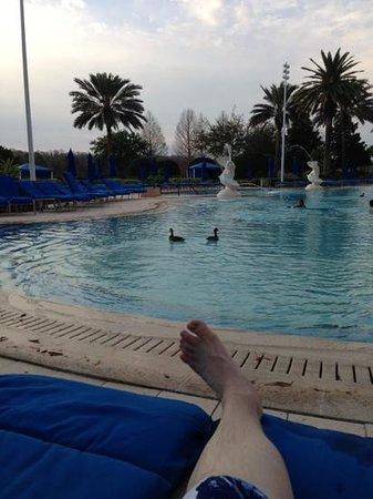 The Ritz-Carlton Orlando, Grande Lakes:                   ducks came for a swim...