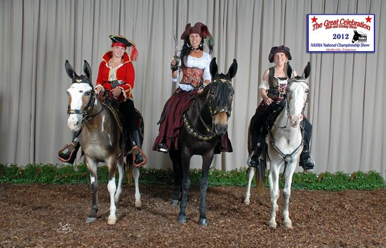 Clearview Horse Farm B&B: Costume Class at the mule show