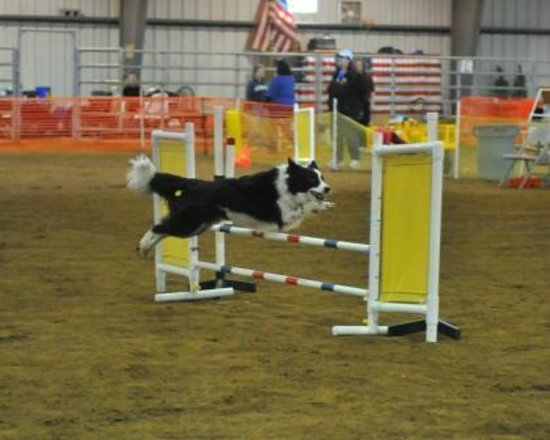 Clearview Horse Farm B&B: A dog show in the arena