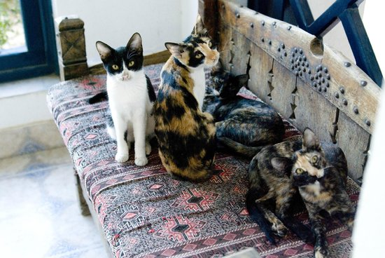 Al Diwan Resort:                   кошки на нашем балконе