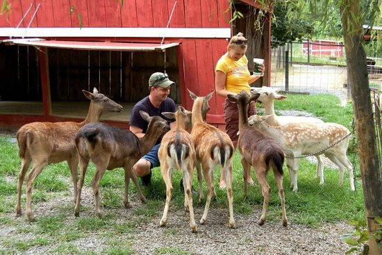 Image result for petting zoo with deer
