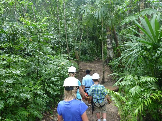 Calico Jack's Belize Jungle Canopy and Zip Lining:                   jungle trail