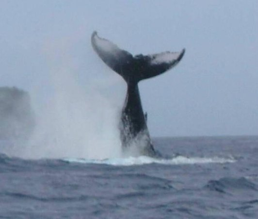 Dolphin Pacific Diving and Whale Watching :                   baleine