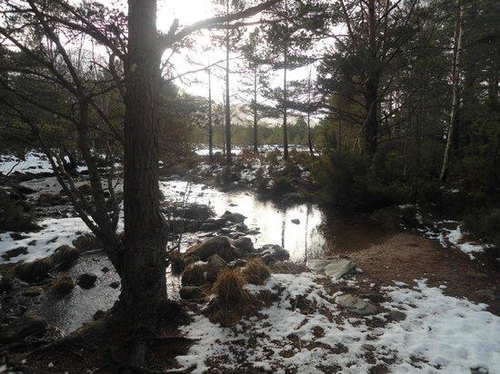 写真Loch an Eilein枚