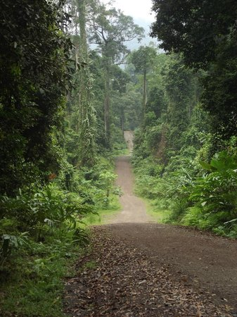 Danum Valley Field Center:                   The road