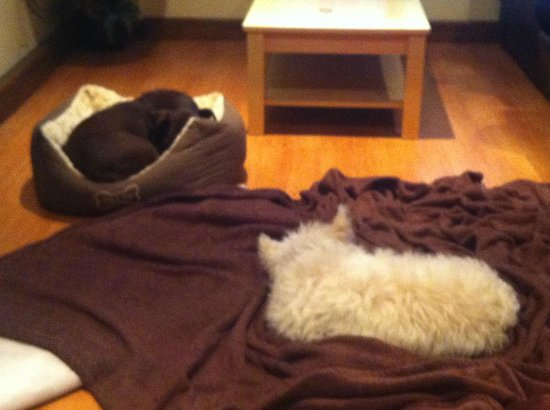 Westfield Lodge:                   2 shattered dogs after a day walking on the moors!