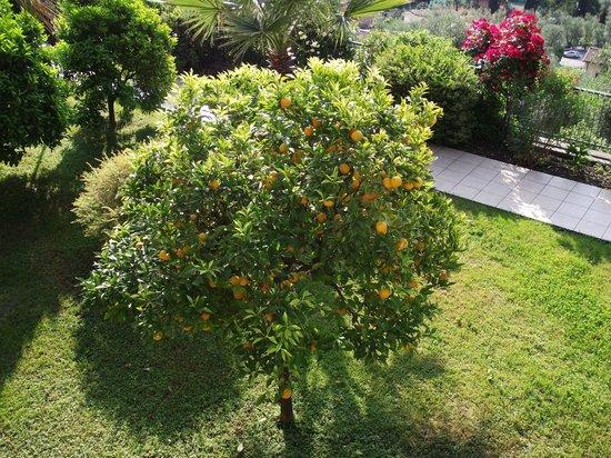 Hotel San Pietro: Orange Tree