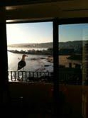 Monterey Bay Inn:                   We had a visitor each morning. The view from our room.