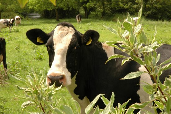 The Castle Country House : Dairy Country