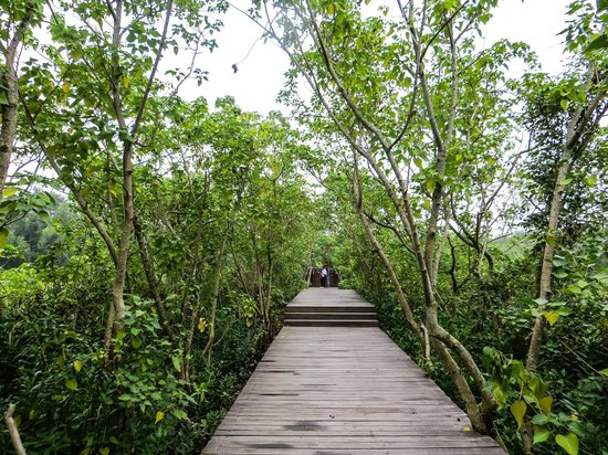 Qi'ao Island: The Mangrove nature trail again