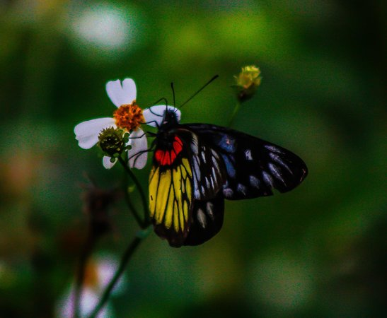 Qi'ao Island : A place of insects, one of the common late season butterflys