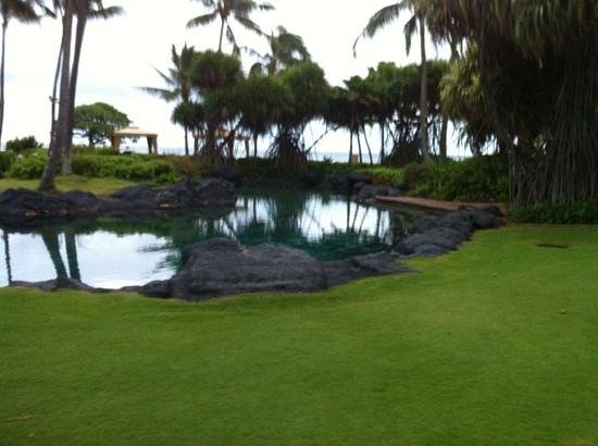 Grand Hyatt Kauai Resort & Spa:                   The sea water lagoon.......