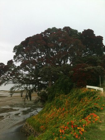 Kawhia Beachside S-Cape Holiday Park: Pohutakawa are NZ's summer Christmas trees