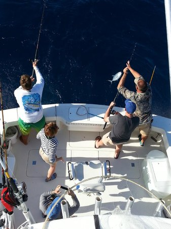 Wide Open Sport Fishing: reef fishing
