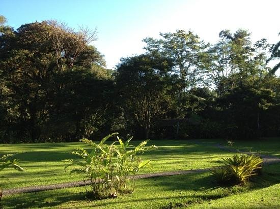 Pacuare Lodge: golf course.  just kidding. deforested area