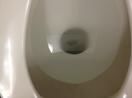 Doubletree by Hilton Bloomington - Minneapolis South: Leftovers in the toilet that wouldn't flush