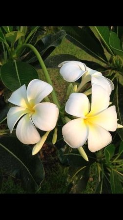 Navutu Dreams Resort & Spa: flowers in the garden