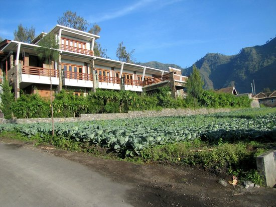 Sukapura, Indonesien:                   Wonderful cabbages